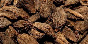 इलायची (black cardamom)